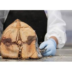 Pain Carasau sardaigne Pâte