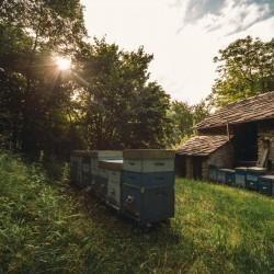 SALSA DEL TARTUFAIO A LA TRUFFE D'ÉTÉ